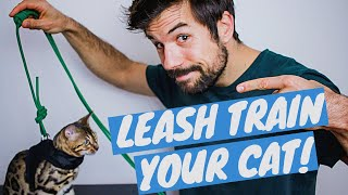 TRAIN YOUR CAT TO WALK ON A LEASH Using Positive Reinforcement - TUTORIAL