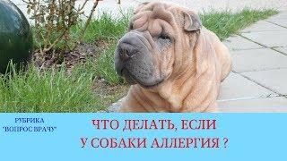 02.02.18 Аллергия у собаки