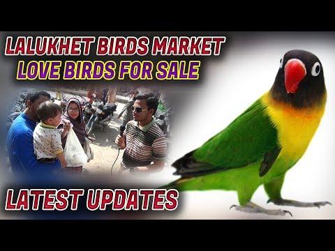 Lalukhet Sunday Birds Market 18-2-2018 Latest Update Jamshed Asmi Informative Channel