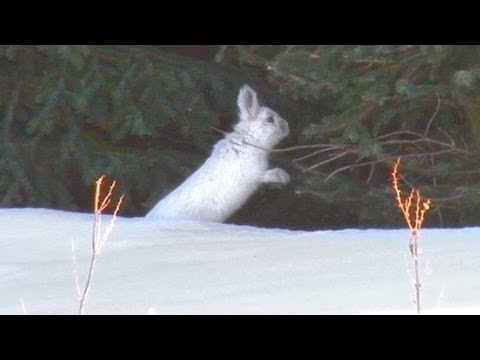 How To Protect Shrubs And Trees From Rabbits