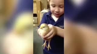 الأطفال يرون الدجاج لأول مرة ★ فيديو مضحك وتفشل
