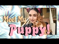 Meet My Puppy!  ToniaLives