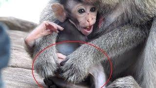 Why Mum Always Catch Bottom Of Baby Monkey ST878 Mono Monkey