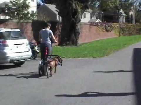 PIt bull powered scooter