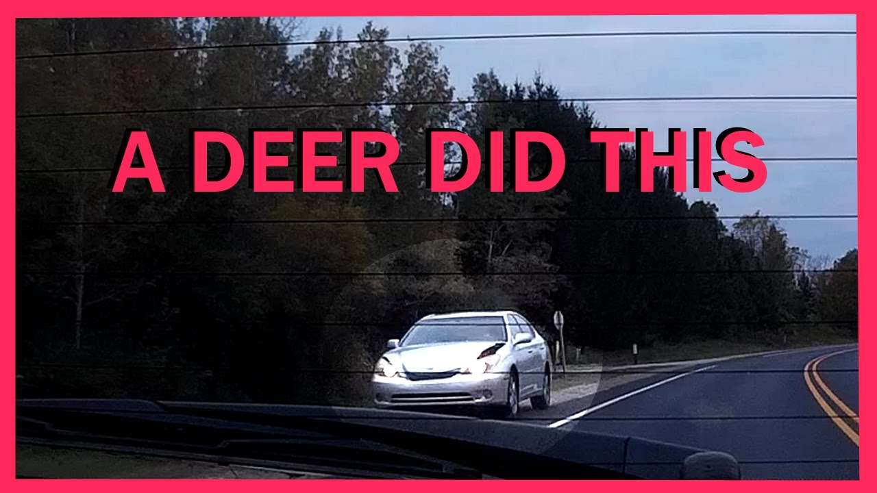 Car Crash Deer Vs Car Crash - Accident Caught On Dashcam - Youtube