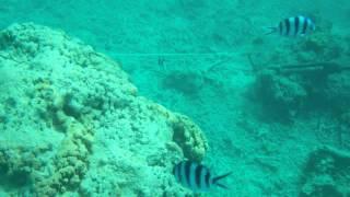 Scuba Diving near Fish Eye at Piti, Guam HD 720p
