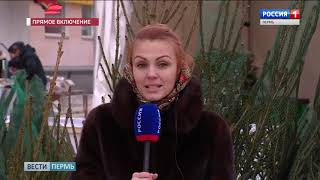 В Перми открываются ёлочные базары