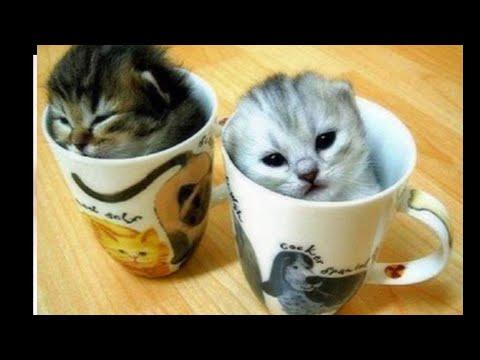 OMG Super Cute Kittens! Cute Cats! Kittens