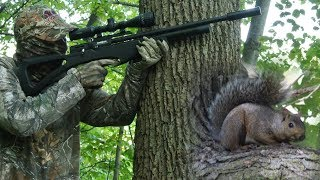 Airgun Hunting:How to Hunt Squirrels with an Air Rifle