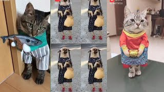 😂 funniest and cutest 🐈 cat and  🐕 dog funny pet animals life 🤣