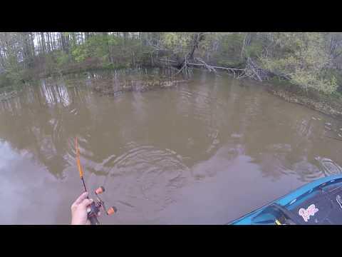 Lake Chesdin Va. Weightless Worm Fishing