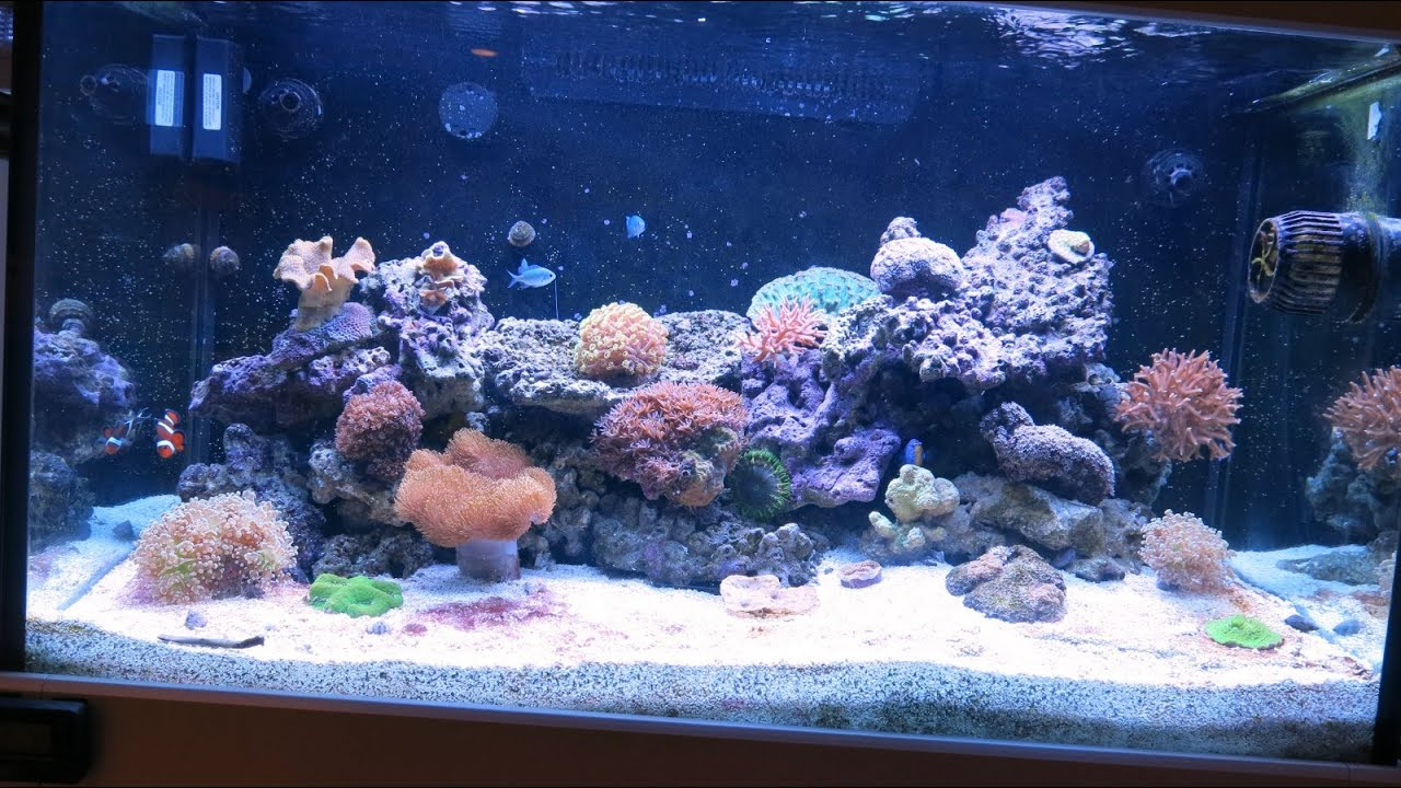 Red Sea Max C 250 Reef Aquarium Part 8 Update As We Roach Day 200 You