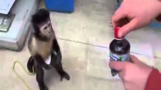 Ak Ll Maymun 39 Bu Kadar Na Da Pes 39 Dedirtti