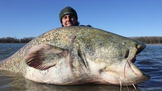 Los 10 peces mas grandes del mundo