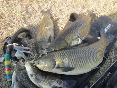 Рыбалка онлайн видео Смотрите онлайн лучшее видео о рыбалке