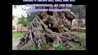 Необычные стебли растений