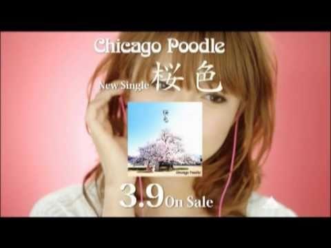 Chicago Poodle「桜色」TV SPOT (桜 稲垣早希Ver.)