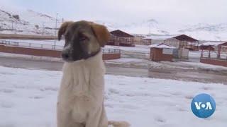 How Locals in Turkish City Help Stray Animals Survive Cold Winter
