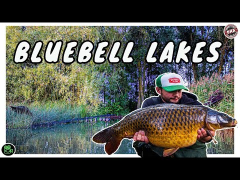 BLUEBELL LAKES **Carp Fishing**