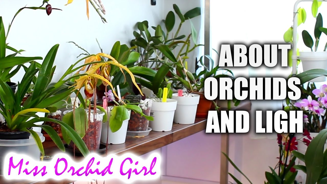 how much light do orchids need low medium and high light