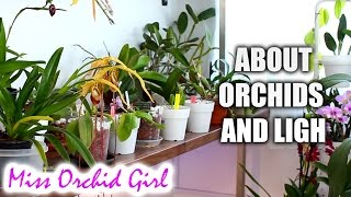 How much light do orchids need? - Low, medium and high light Orchids