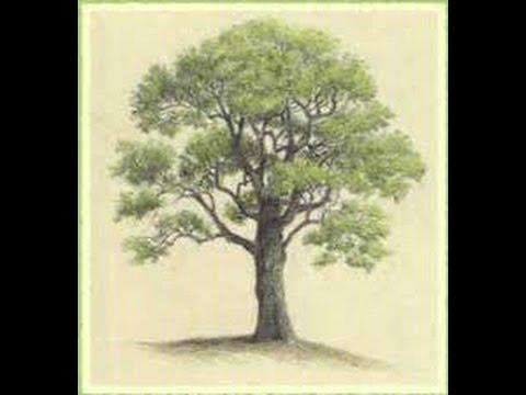 تعلم كيفية رسم شجرة للمبتدئين Ep 1 Youtube
