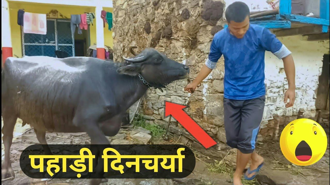 पहाड़ी Lifestyle In Uttarakhand || पहाड़ी दिनचर्या || Pahadi Lifestyle Vlog || Namaste Pahad