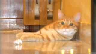 Если кота или кошку тошнит! Рвота у котенка Лео, повергла нас в шок!