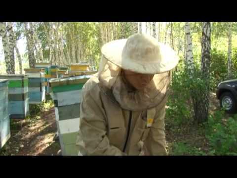 Куплю мед оптом - YouTube