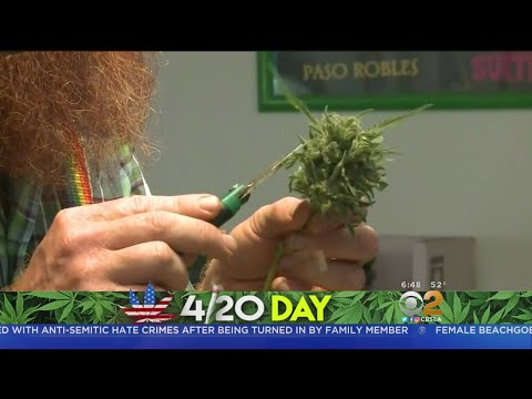 California Celebrates First 4/20 Day Since Weed Was Legalized