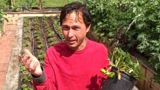 Grow Your Own Strawberries At Home.  Strawberry Information And More.