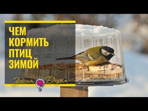 Вопрос: Какой корм птицам давать советуют орнитологи Где почитать?