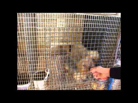 Wisconsin Puppy Mill:  Pups Go To Milwaukee and Madison Pet Stores - Part II