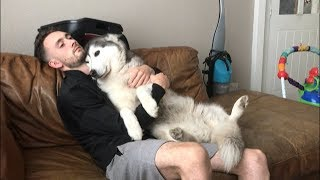 This is how I'm certain some husky dogs love to cuddle!!