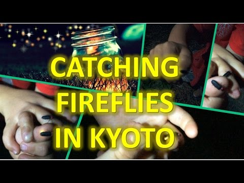 Catching FIREFLIES in Kyoto, Japan | TheRainQueen.com