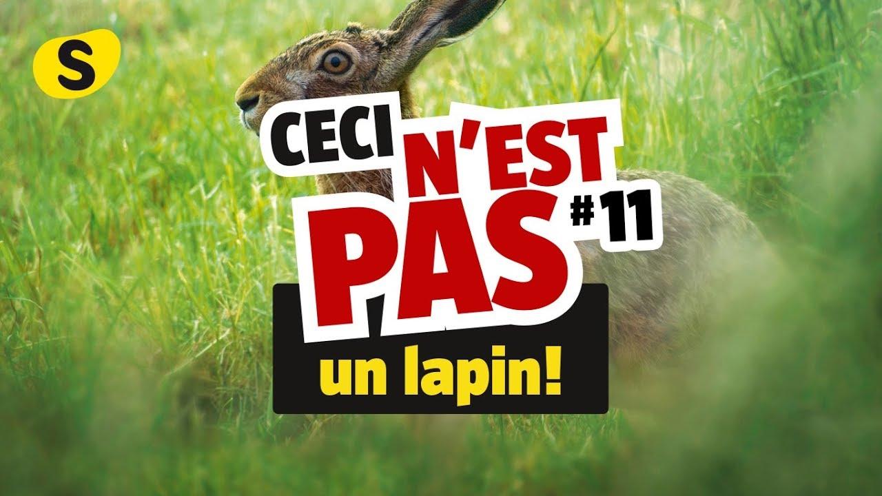 Ceci Nest Pas Un Lapin >> Ceci N Est Pas Un Lapin 11 Youtube