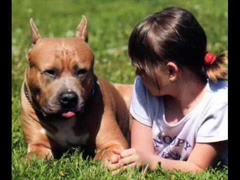 Ложная беременность у собак:причины, признаки, лечение