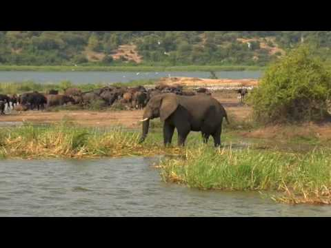 Africa Animal Video