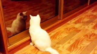 Cats vs. Mirrors 😹 Funny Cats Reaction With Mirrors (Part 1) [Funny Pets]