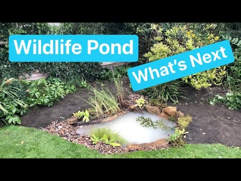 Pond Builders Tips - What To Do With A New Wildlife Pond