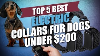 Top 5 Best Electric Collars For Dogs Under $200