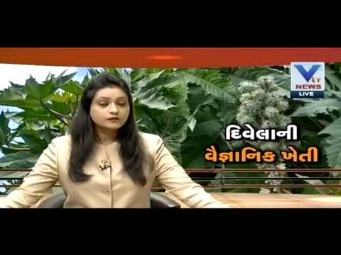 Scientific Farming of Castor | VTV Gujarati