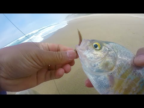Surf Fishing For  Perch
