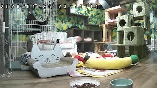 Live() [Cat live]
