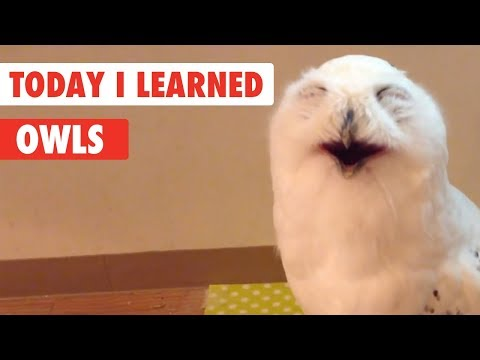 Today I Learned | Owls Facts