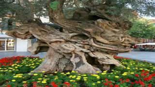 Lastminute Reisen Mallorca - Urlaub Guenstig online buchen
