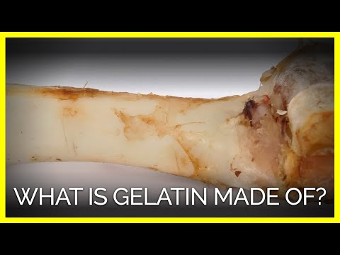 Gelatin Is Made From Animal Body Parts