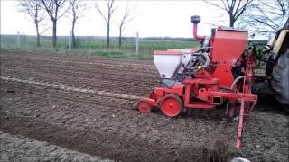 Uprawa , siew kukurydzy i wałowanie trawy z jęczmieniem