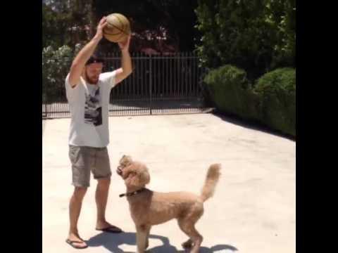 Jensen Ackles dog
