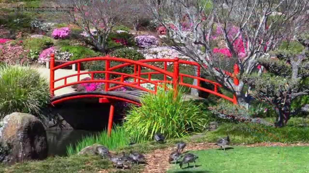 BEAUTIFUL GARDENS AUSTRALIA U2022❥ JAPANESE BEAUTY HD1080p   YouTube Part 49